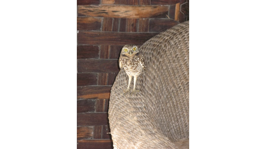 My new friend: the owl
