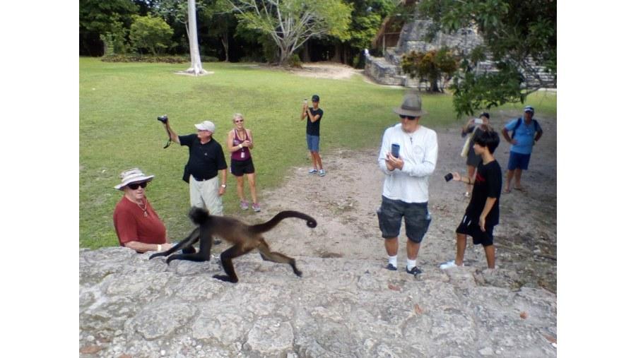 Spider Monkey, Chacchoben