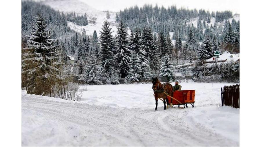 Passeando na neve