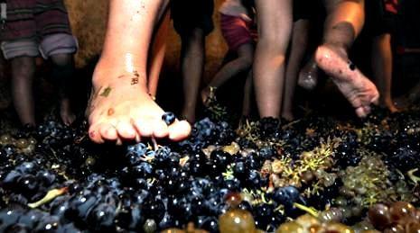 Wine Making at Barcelona