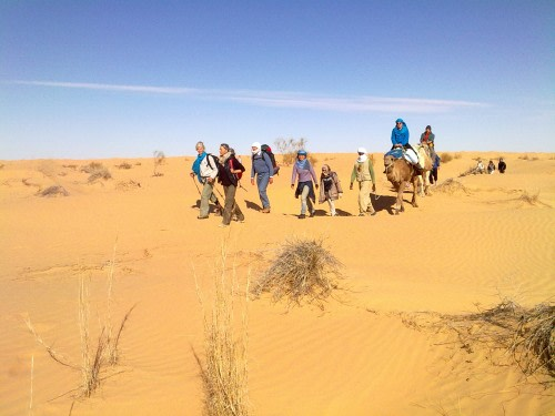 Tour with Dromedary in the Desert