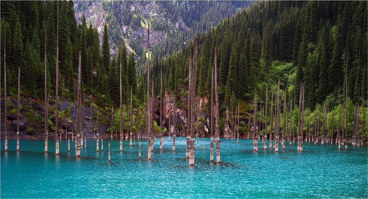 Underwater Forest at Lake Kaindy, Kazakhstan