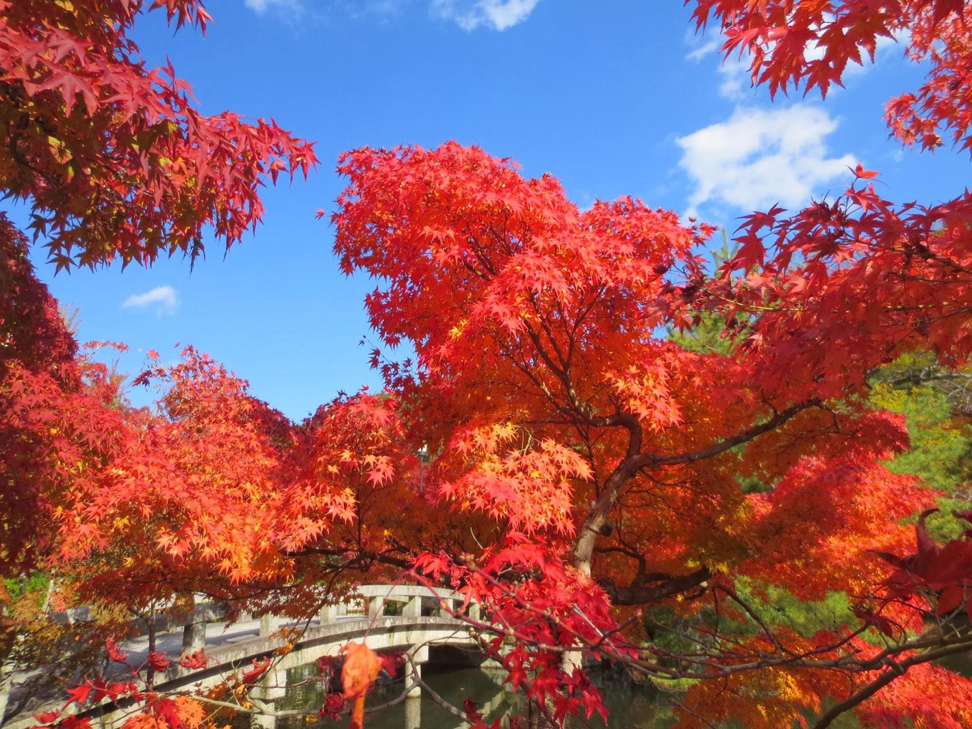 Philosopher's Path between Ginkaku-ji & Nanzen-ji