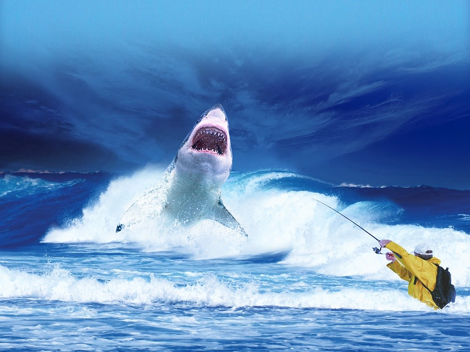 White Shark In Gansbaai, South Africa