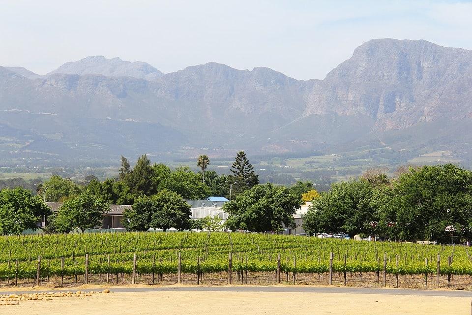 Vineyards Of Stellenbosch, South Africa