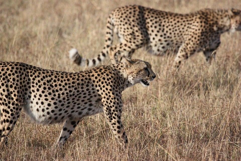 Views on the Safari