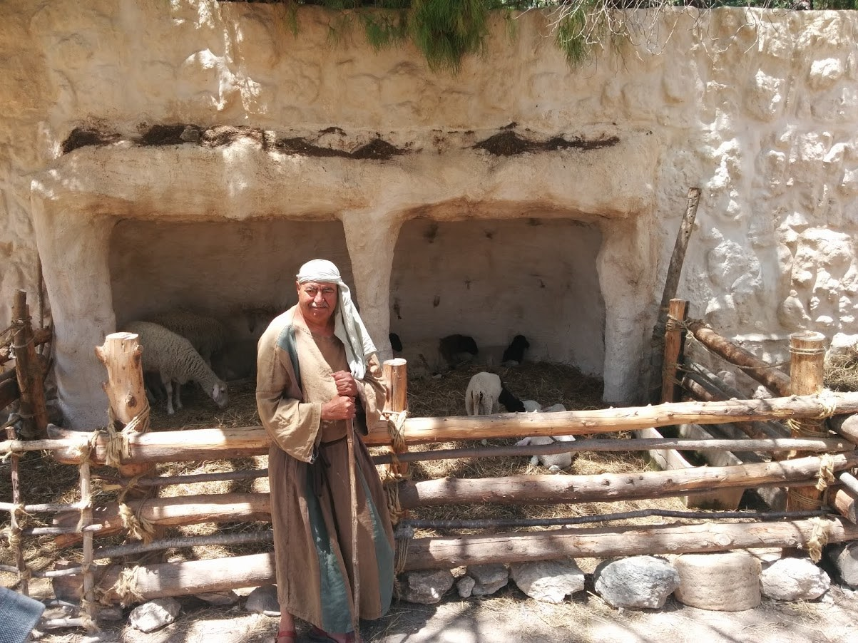 Bovidae Animal Farm at Nazareth