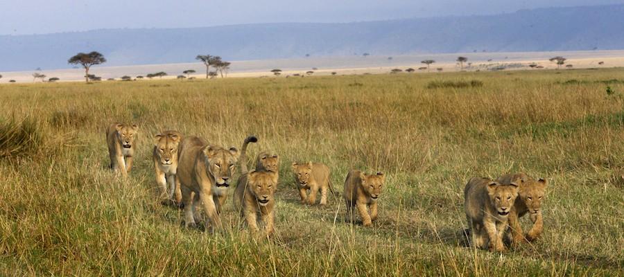 Walk among the animals