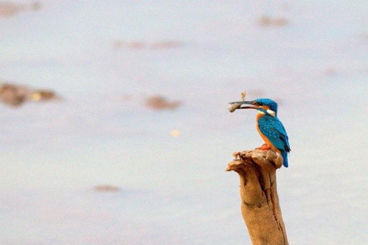 Exotic birdlife