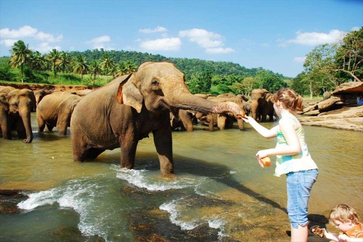 Pinnawala Elephant Orphonage