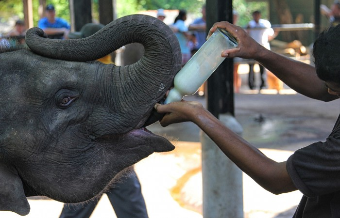 Scenes from the Elephant orphanage