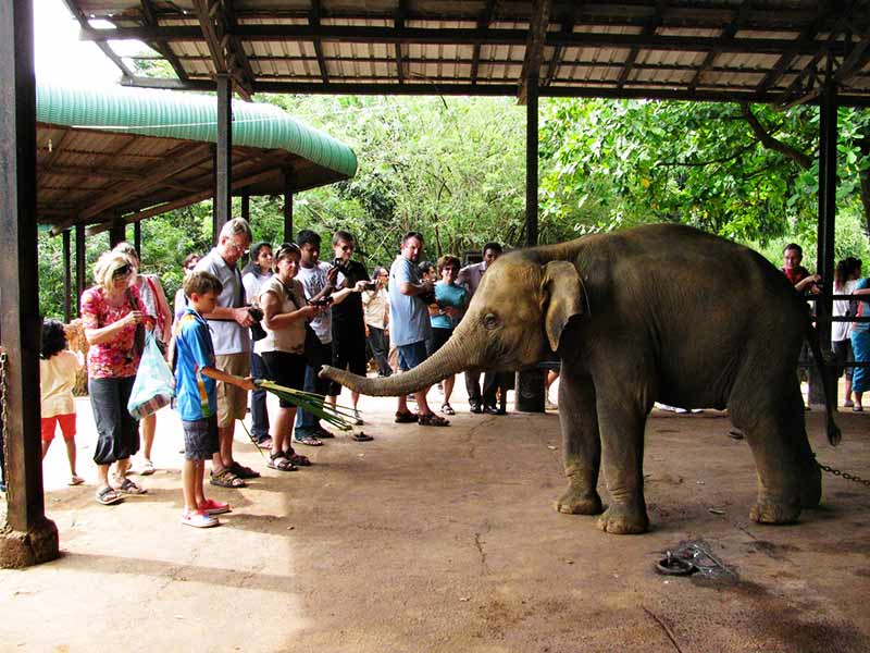 Activities at the Elephant Orphanage