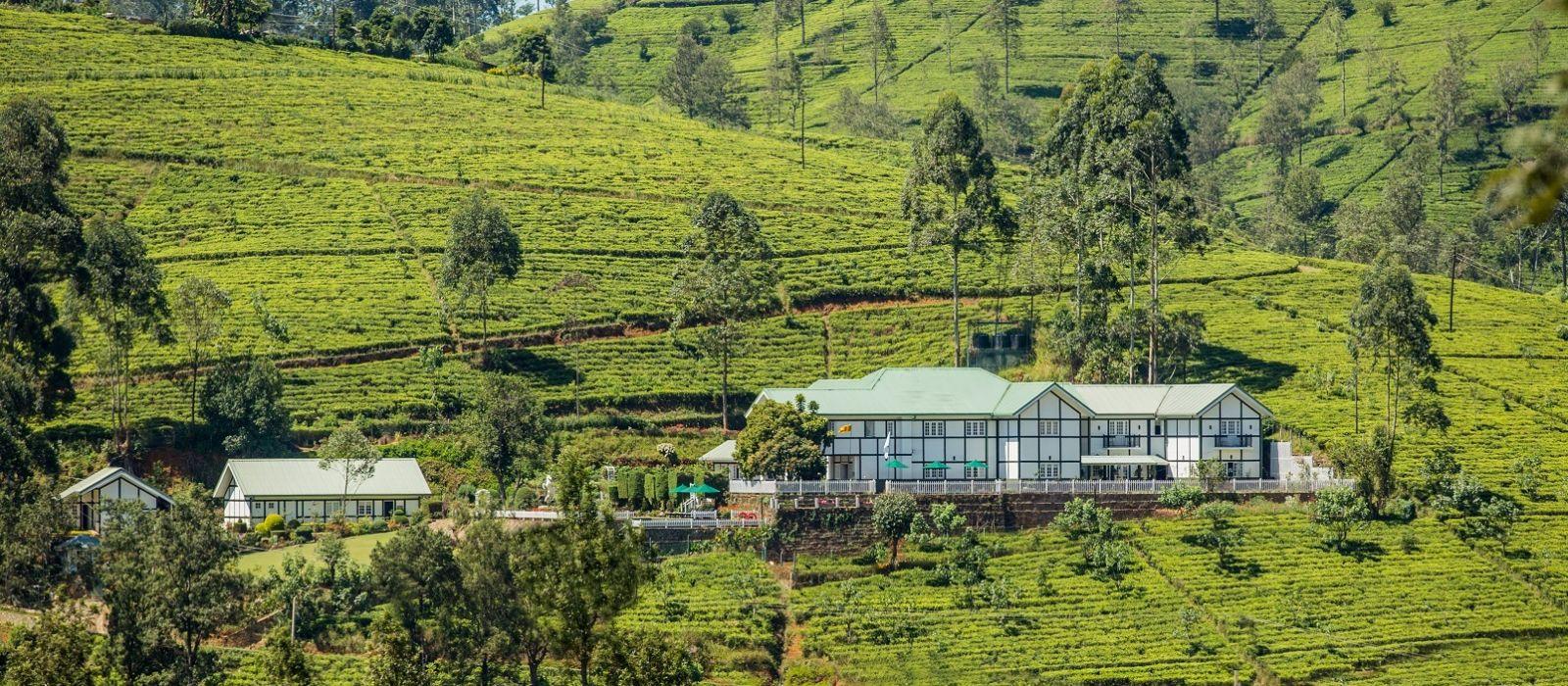 Tea estates in Nuwara Eliya