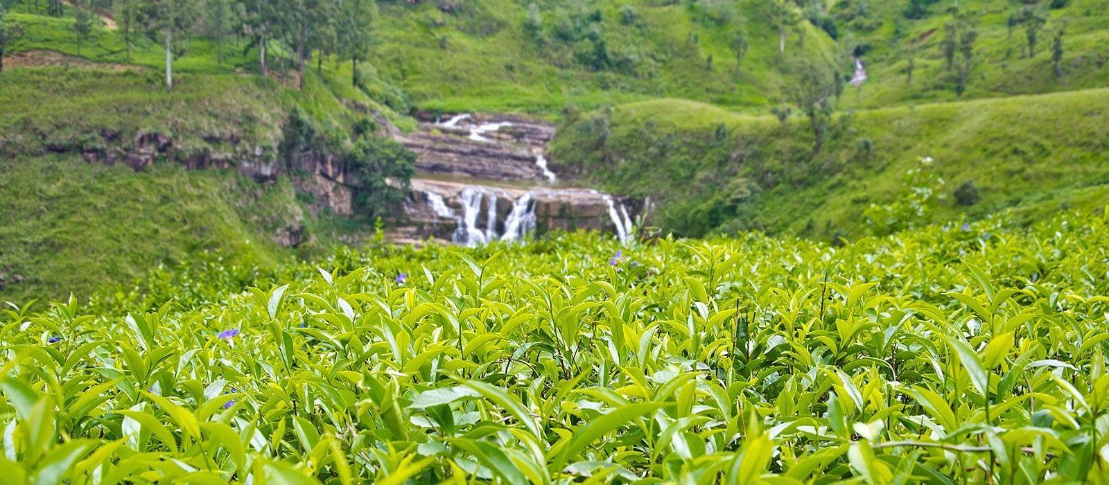 View at Nuwara eliya