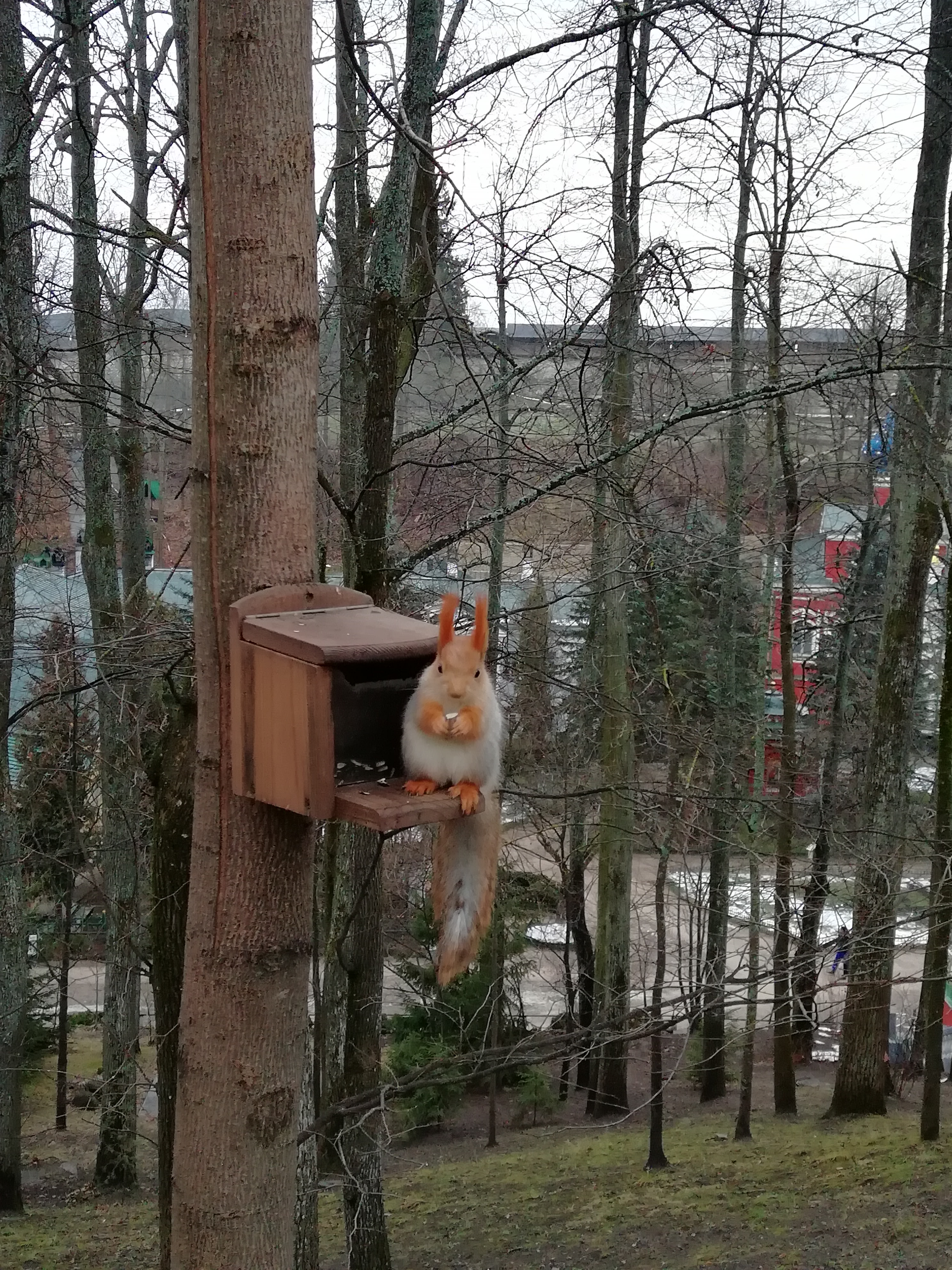 A squirrel in the Assumption monastery