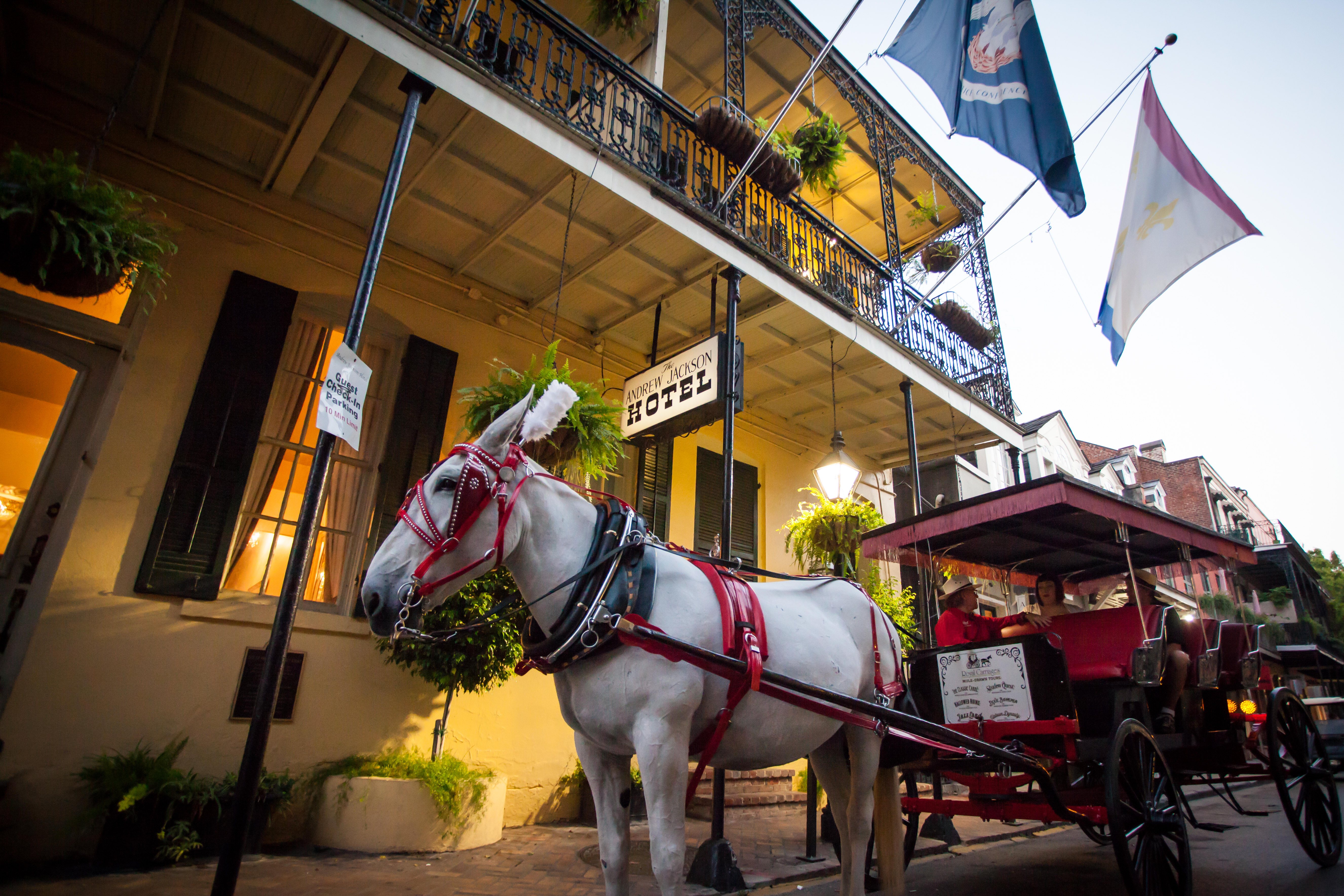 Discover New Orleans the Authentic Way