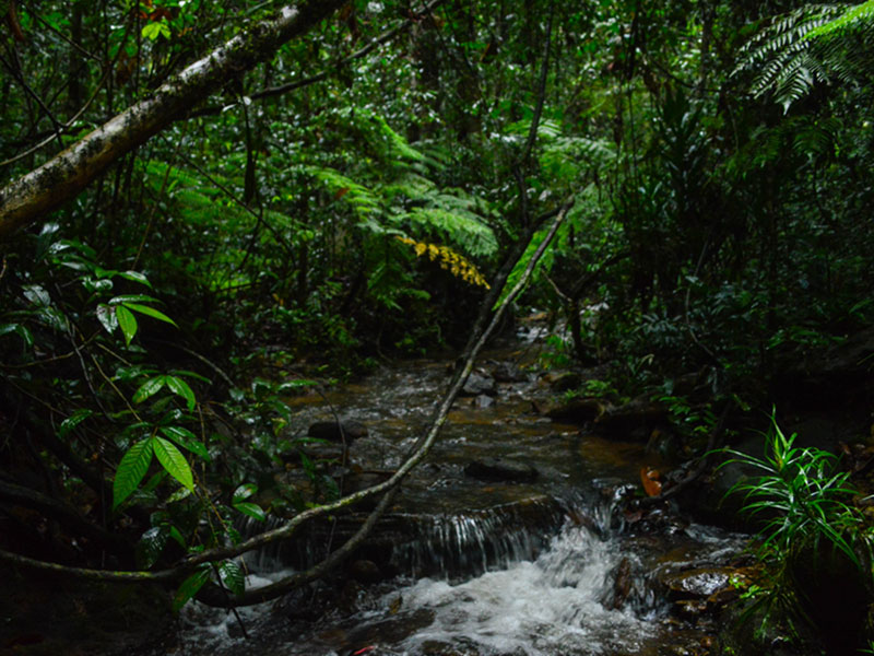 The grand rainforest
