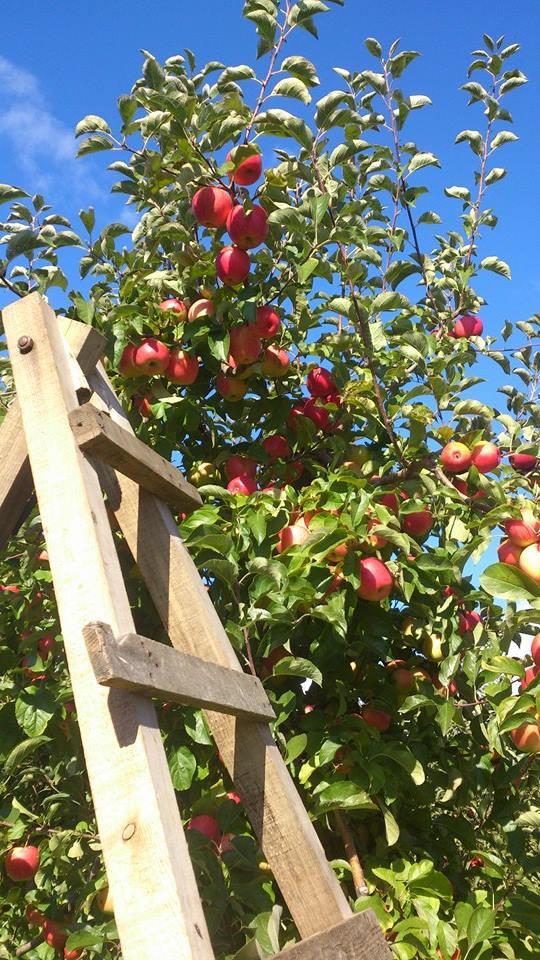 Macedonia Fruit Orchard