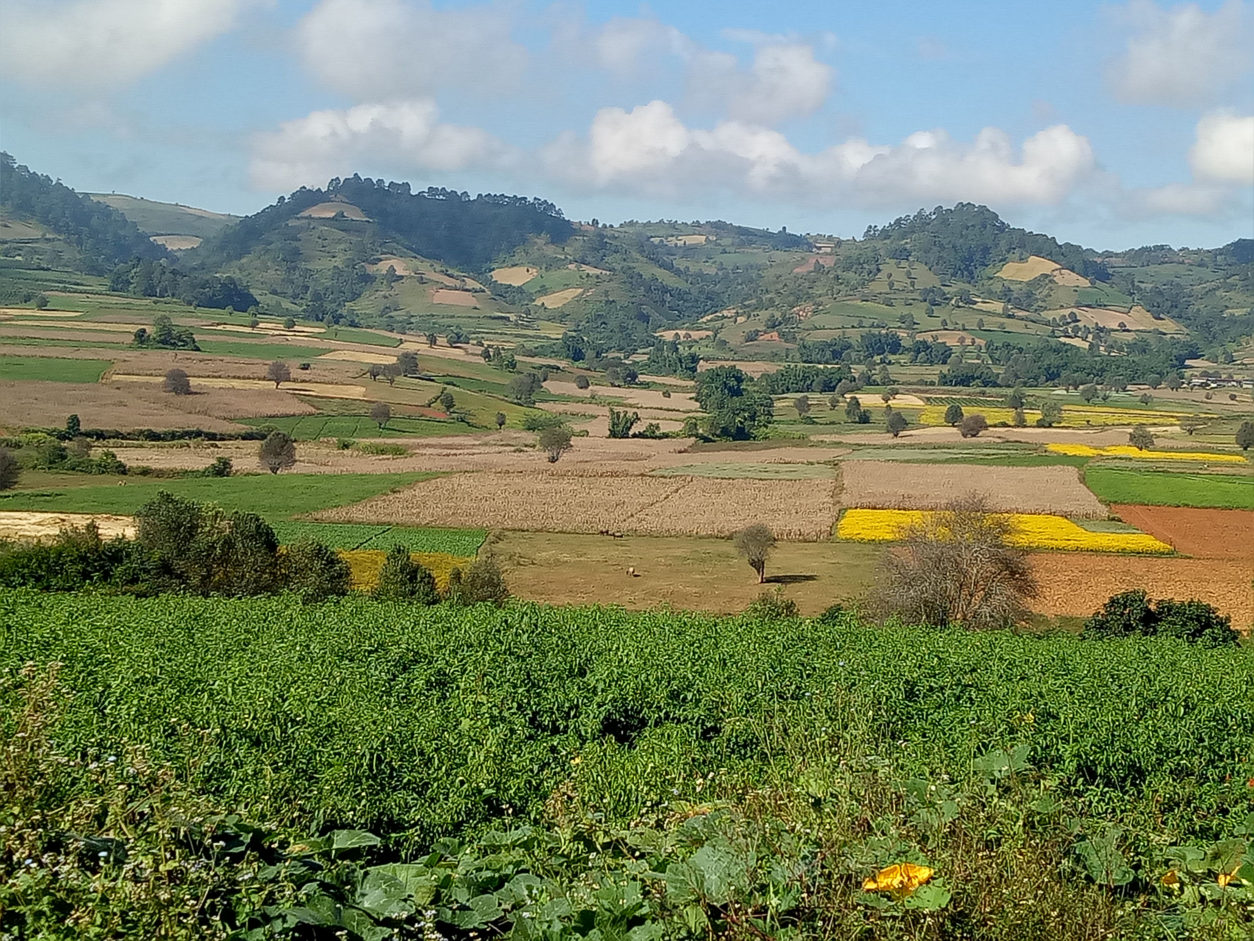 Trek Through the Hills and Sight Unique Plantation