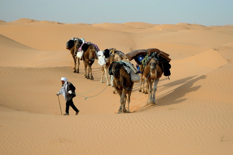 Witness Camels and Sand Dunes at Matmata