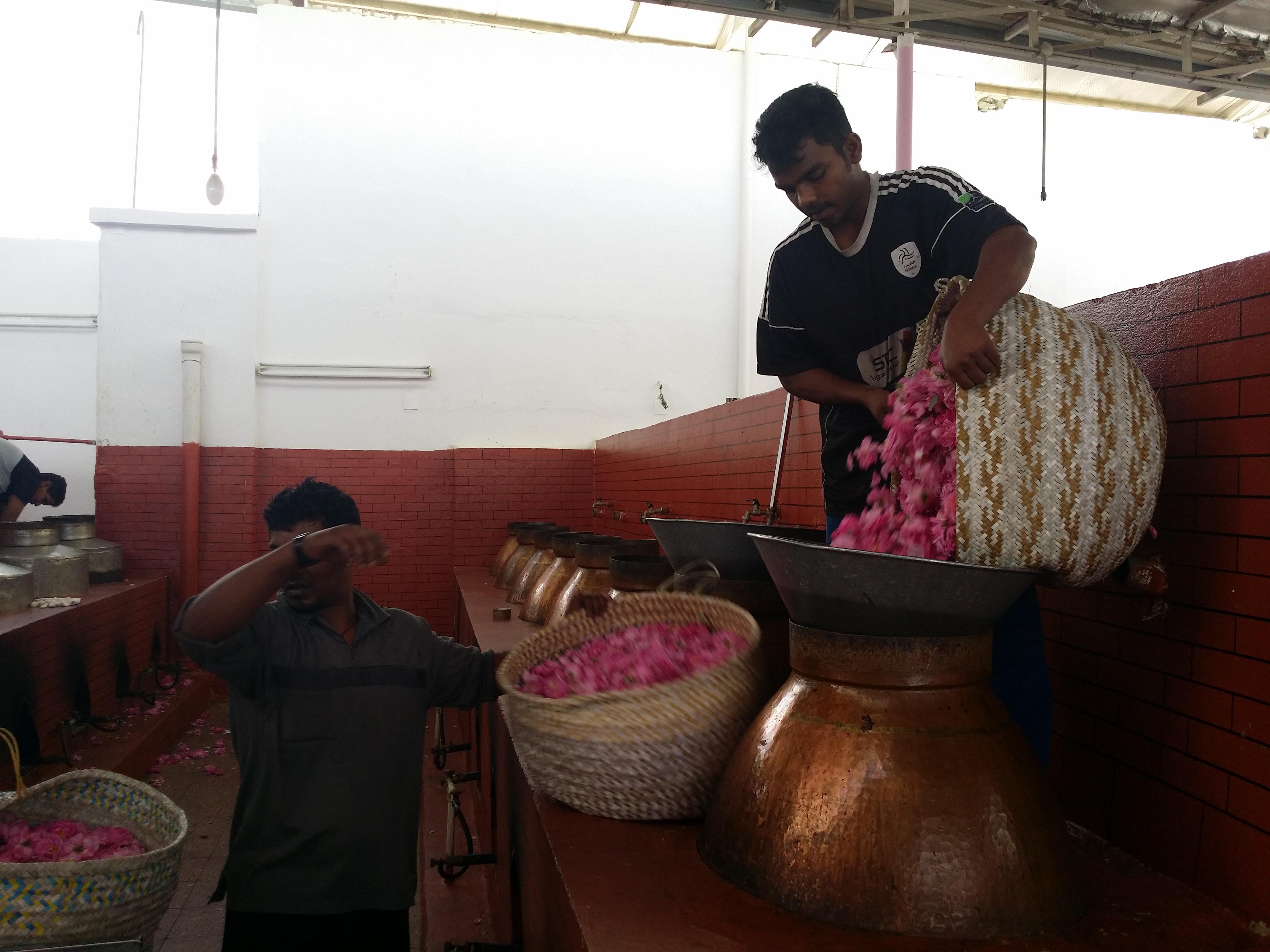 Rose Factory In Taif, Saudi Arabia