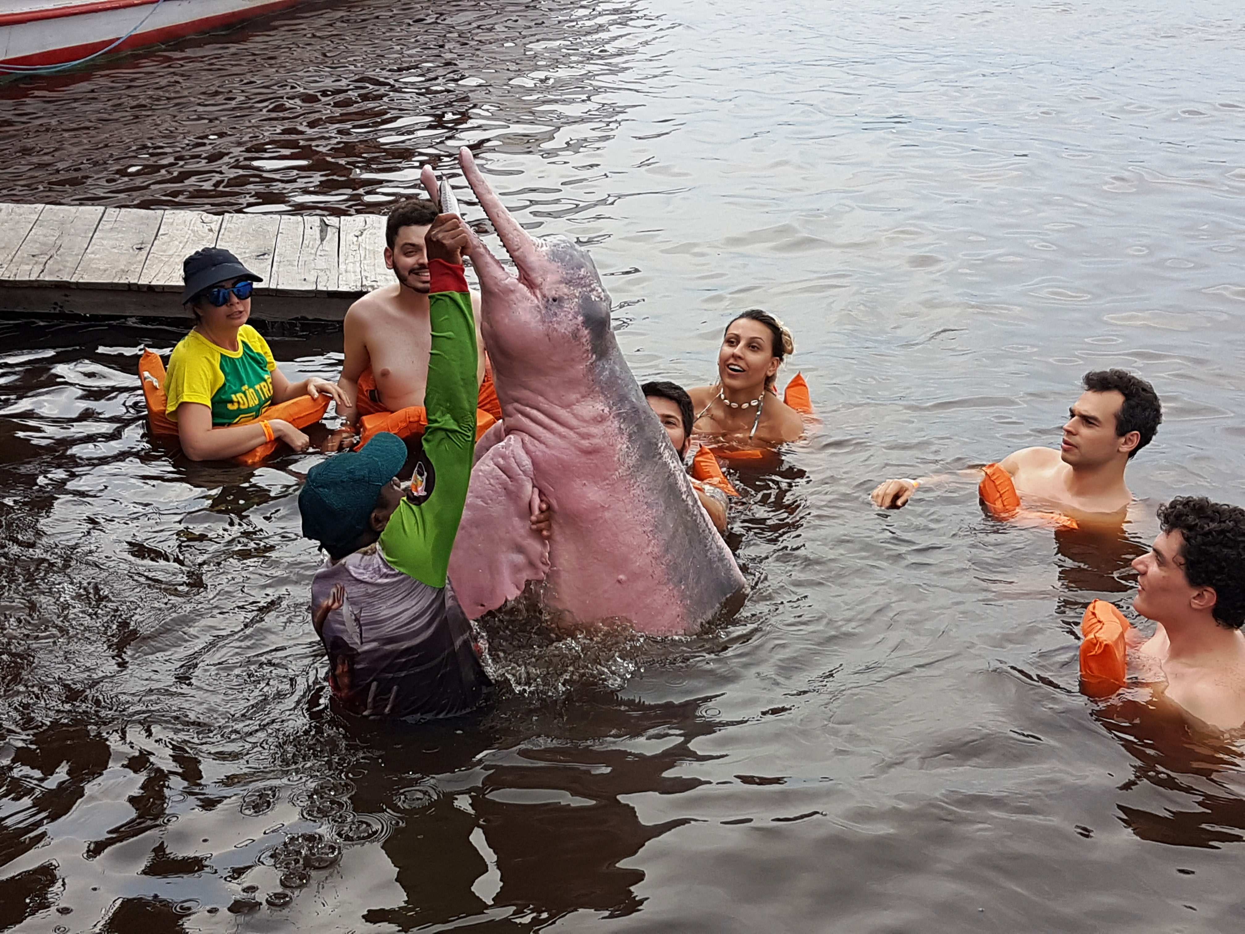 Pink Amazon River Dolphin