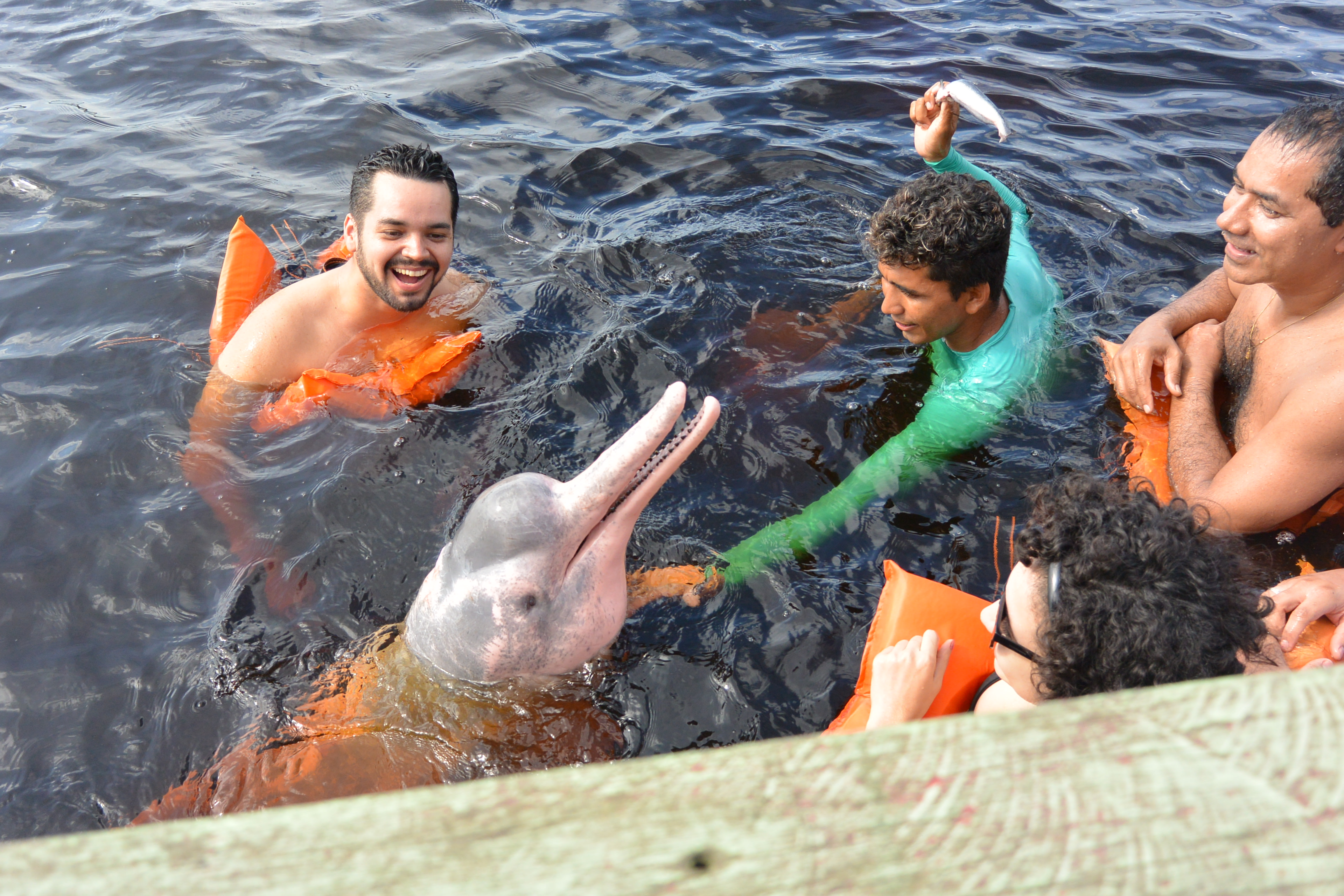 Tourists Swimming with the Dolphin