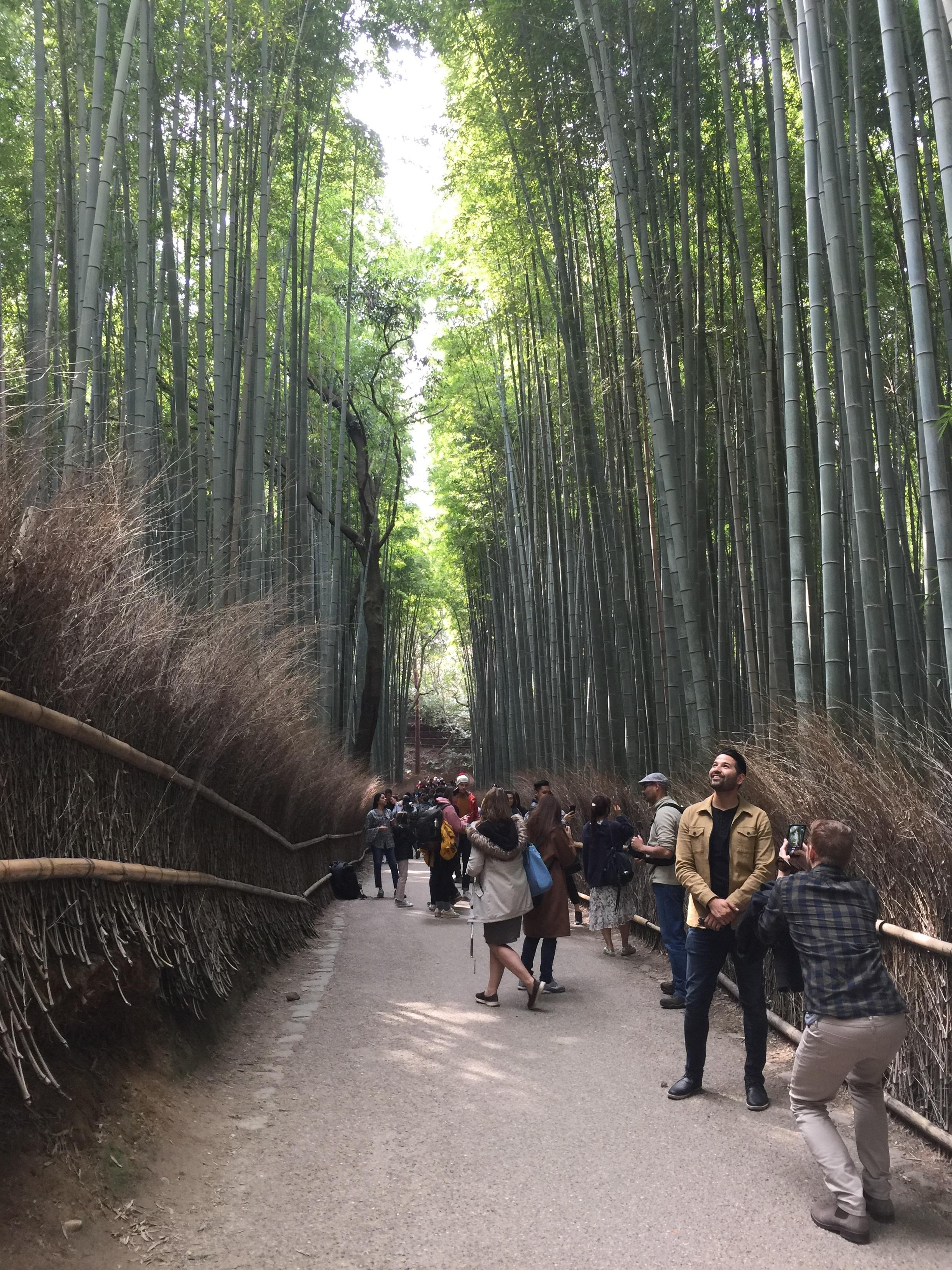 Arashiyama - Sagano Bamboo Groves (2 of 2)