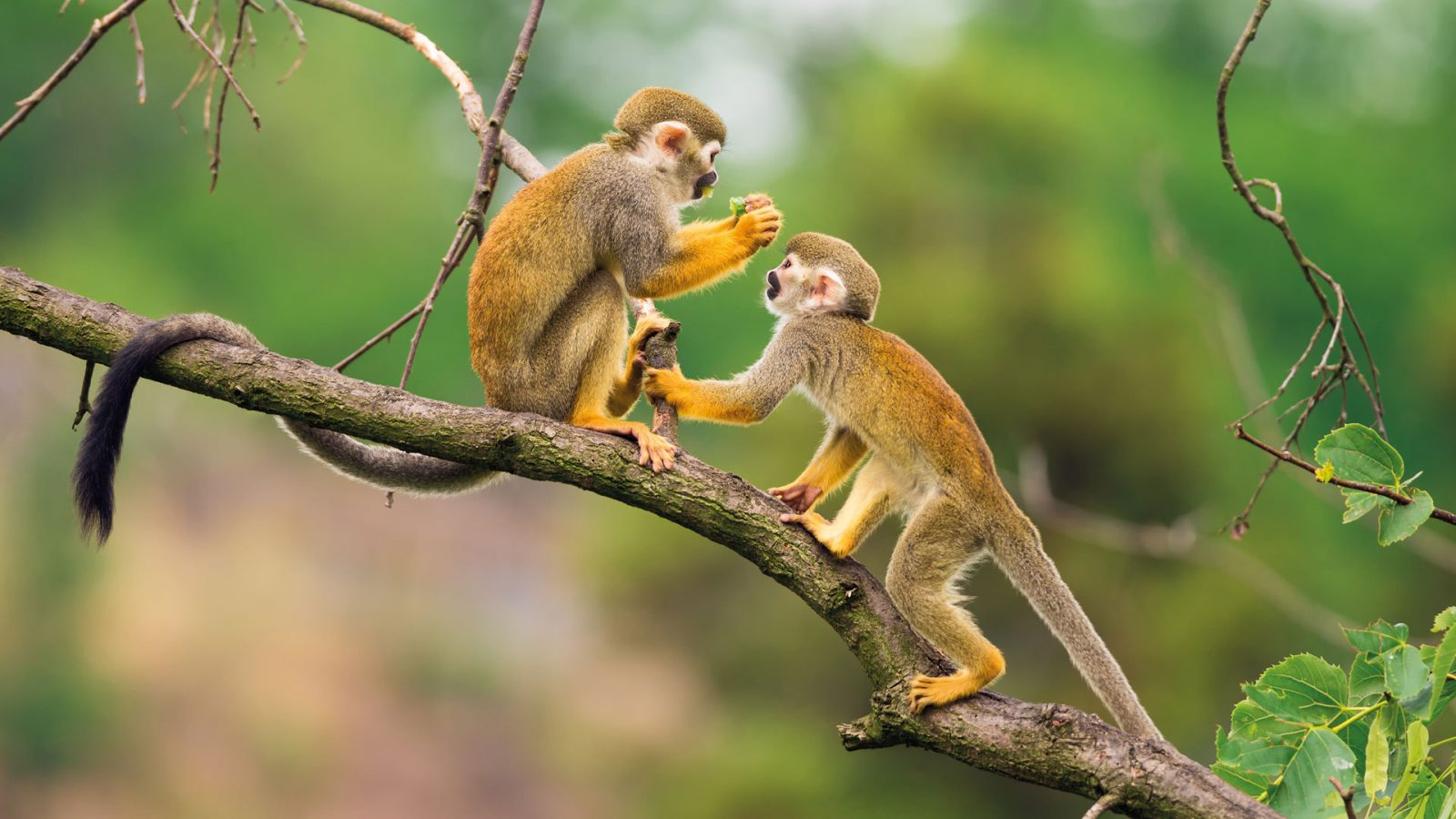 Visit the Monkey Island and admire the monkeys