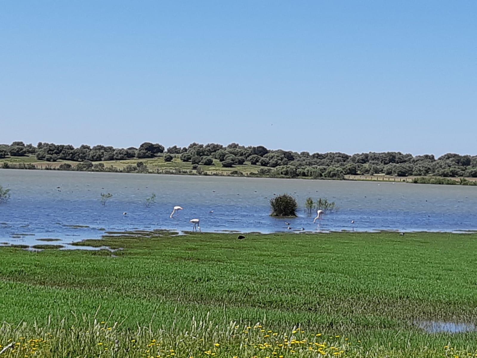 Water Birds in  Dehesa de Abajo