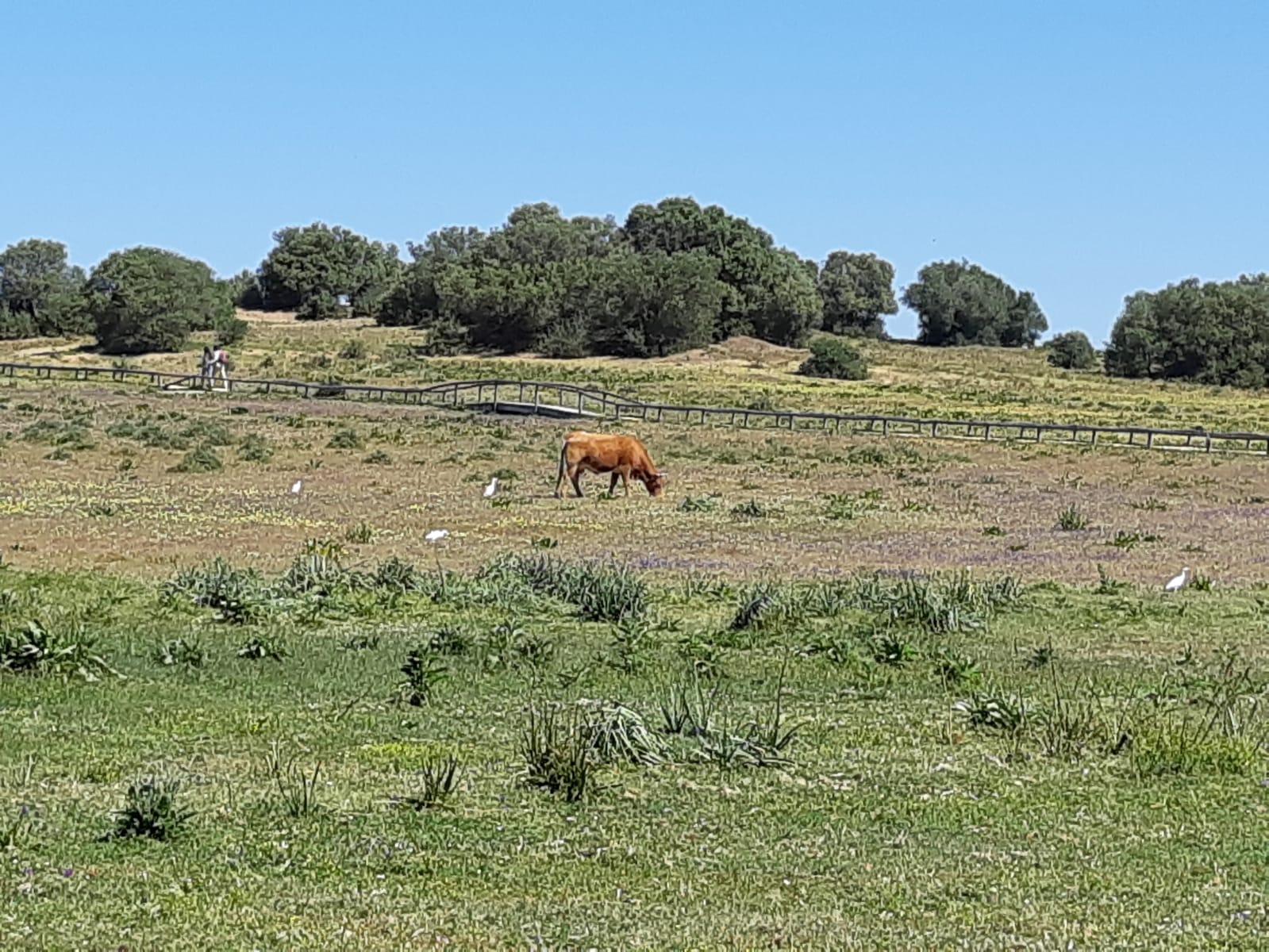 Dehesa de Abajo green landscape