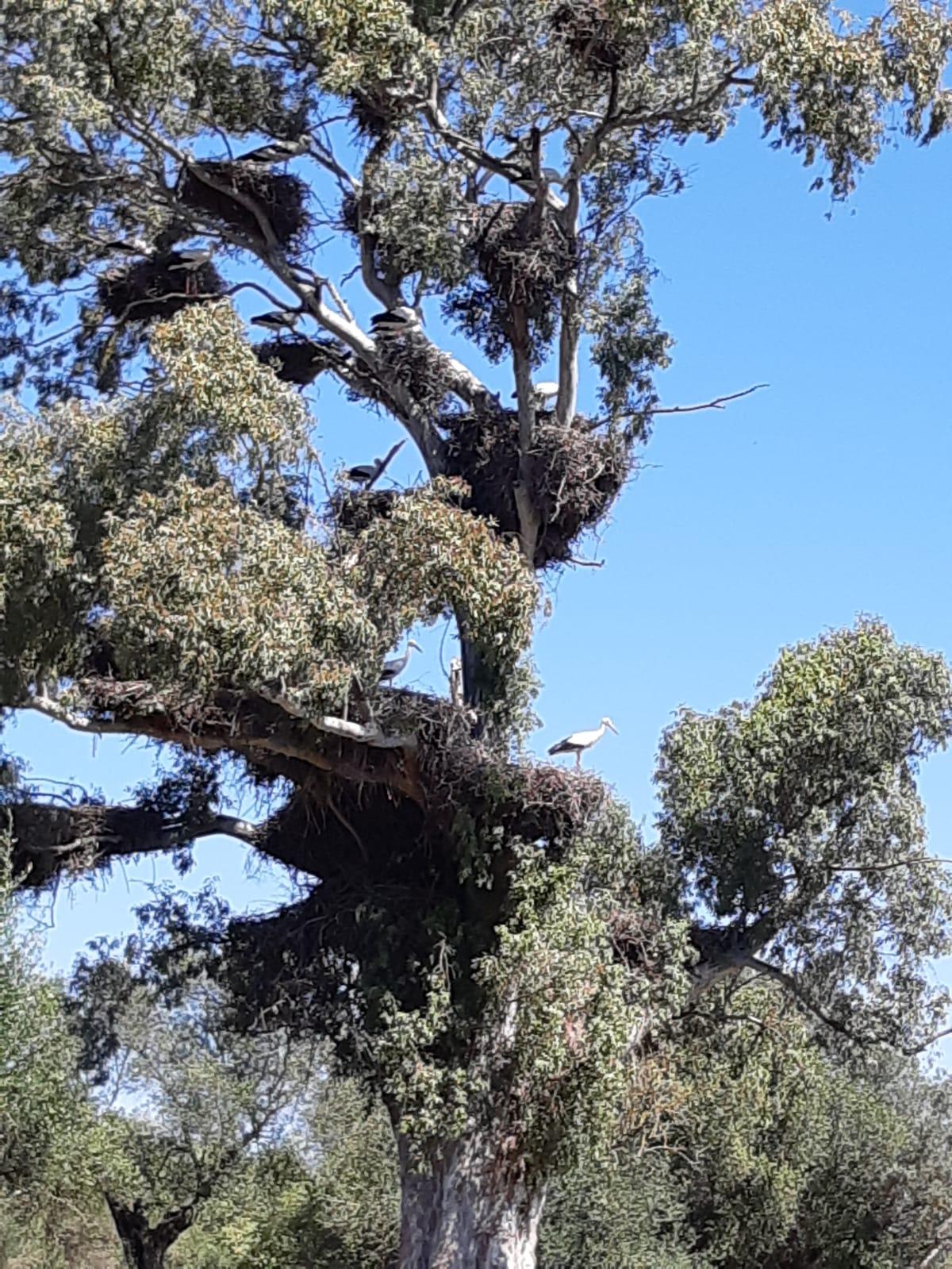 Bird Watching in Dehesa de Abajo