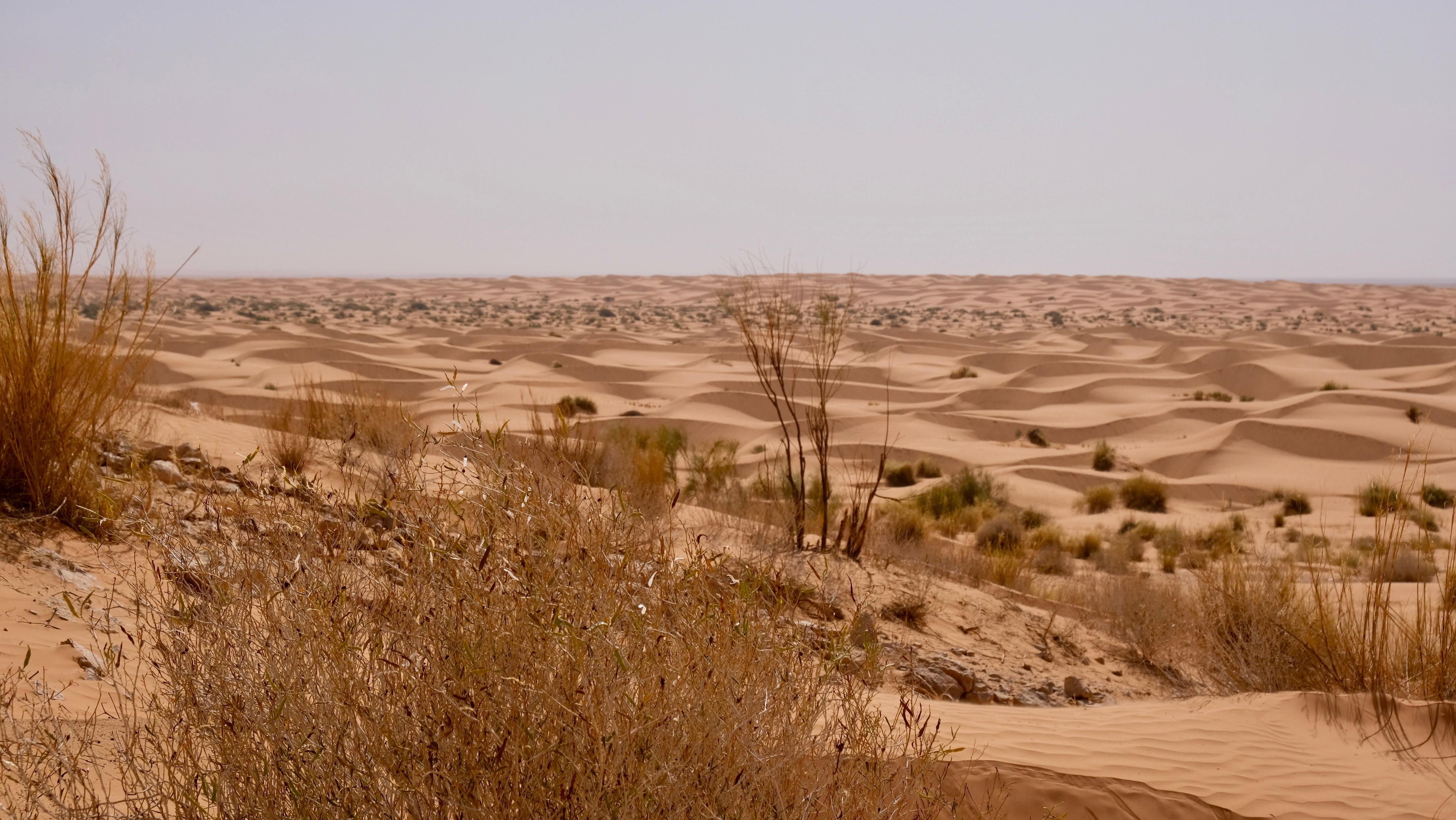 Admire the Desert Landscape, Ksar Ghilane