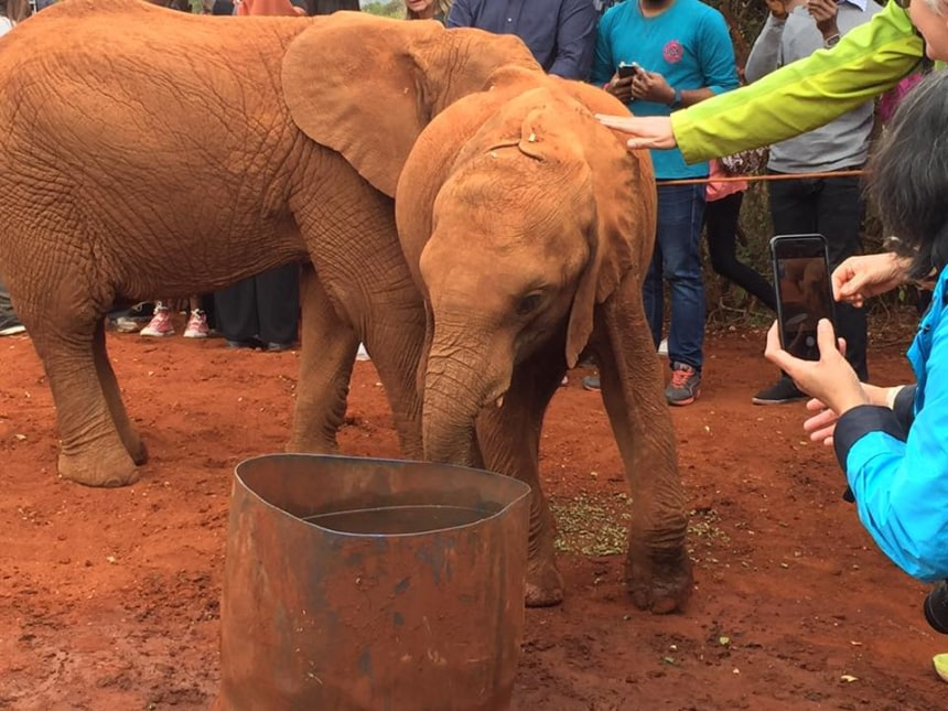 Petting a young elephant