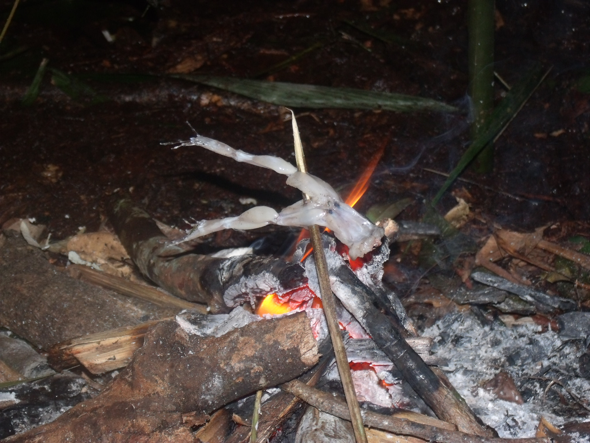 Roasting a frog for food in the jungle.