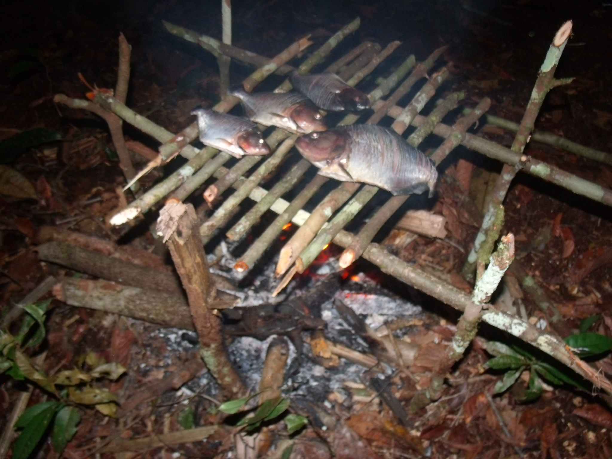 Roasting the fresh catch in the Camp