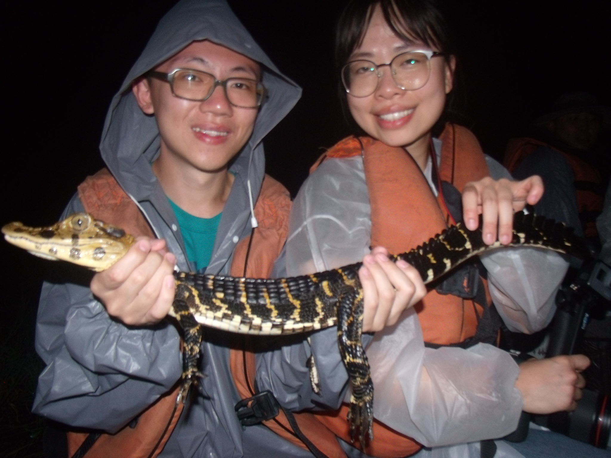 Holding a caiman