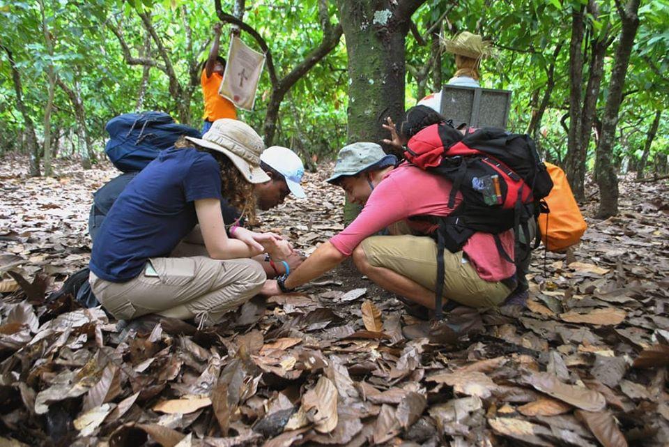 Explore the Cacao Plantation