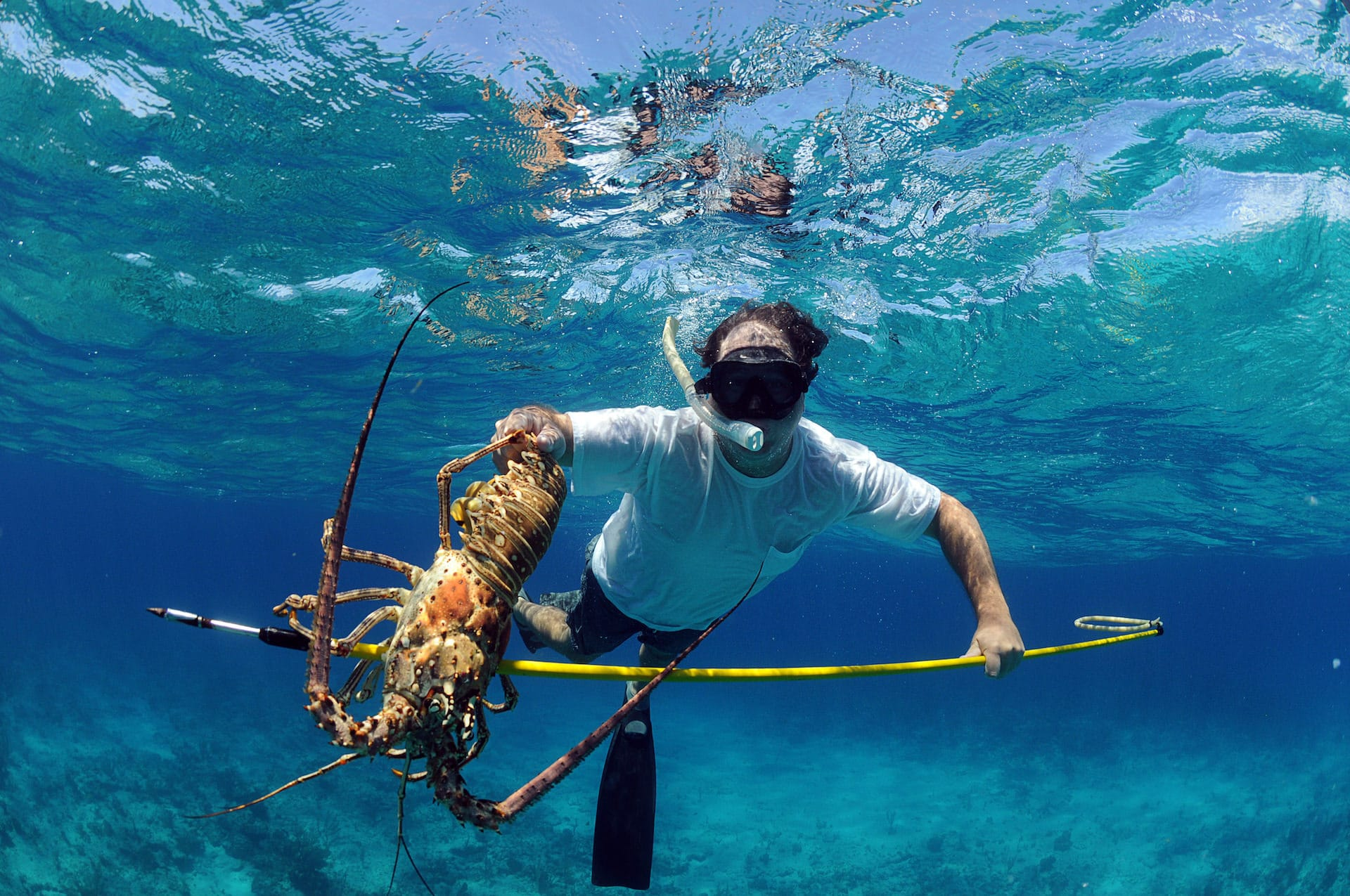 Spearfishing lobster in Cancun