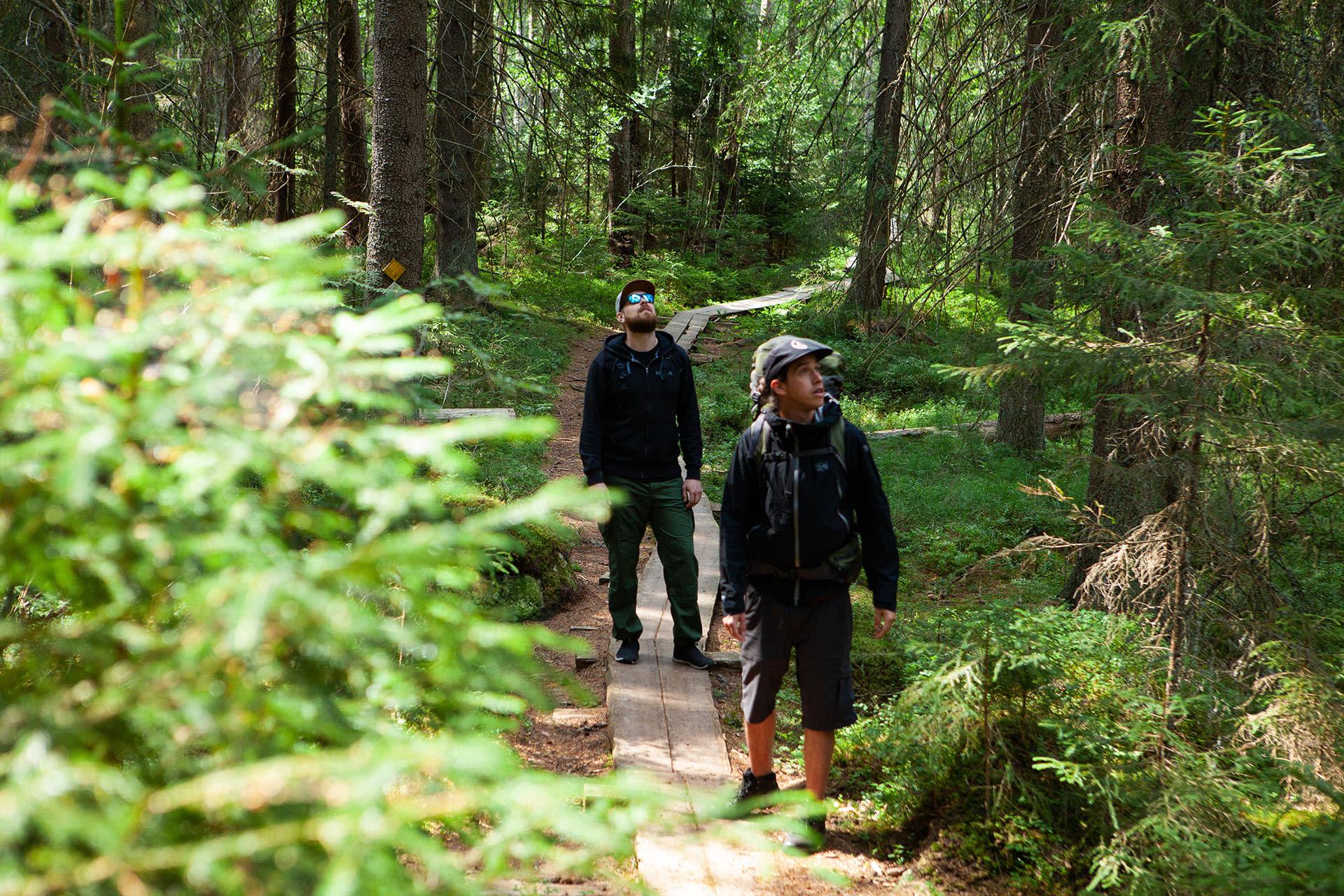 Liesjärvi National Park Tour