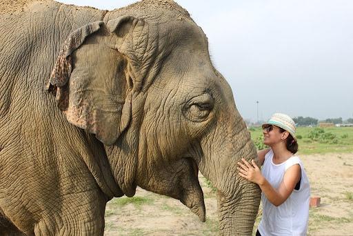 Elephants Conservation Center, India