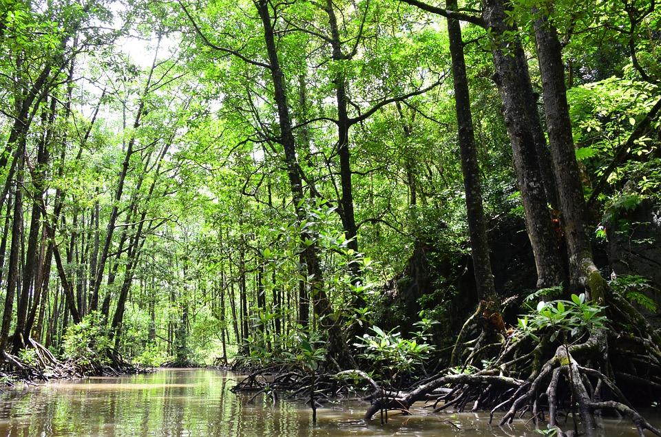 Trudge through the Mangrove