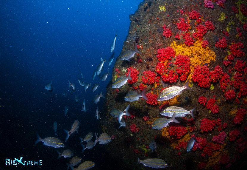 school of fish & corals