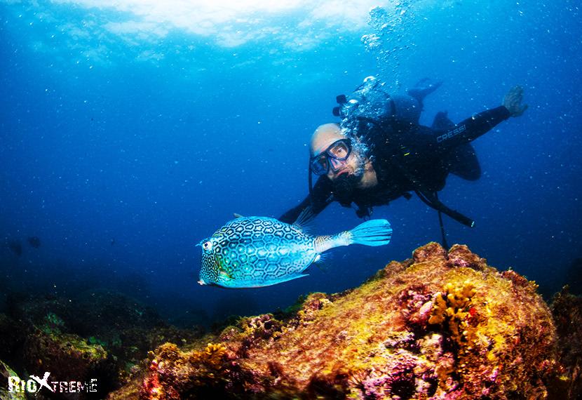 witness amazing fishes