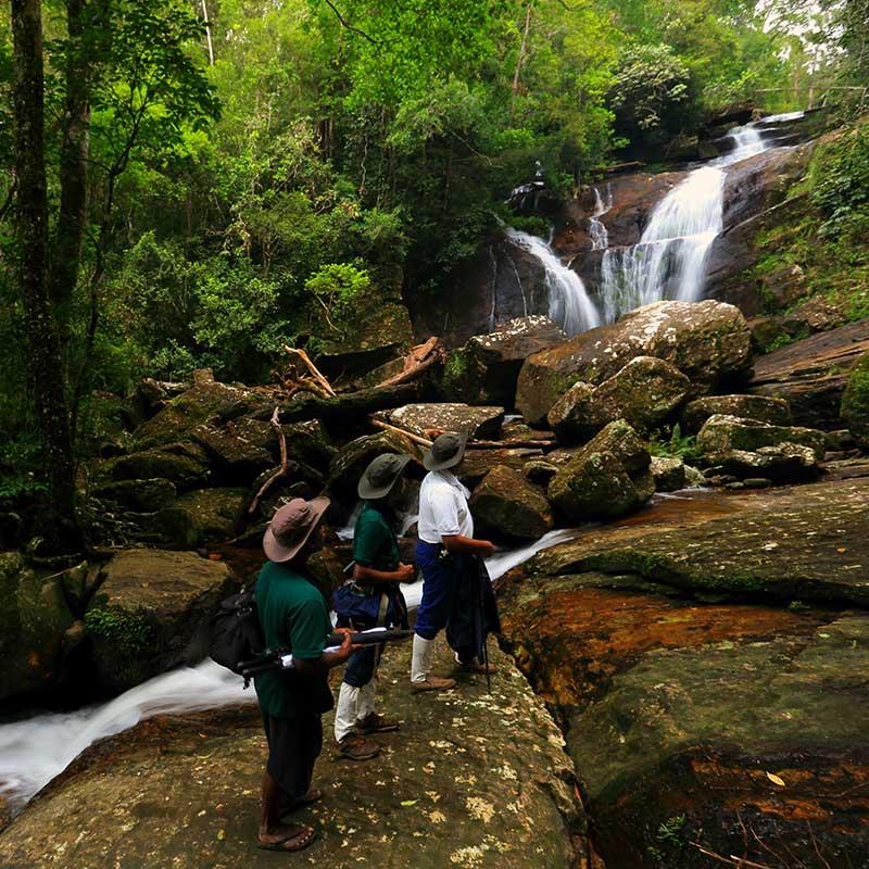 Sinharaja Forest Reserve, Sri Lanka