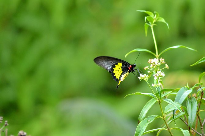 Butterfly in the Sinharaja Forest Reserve