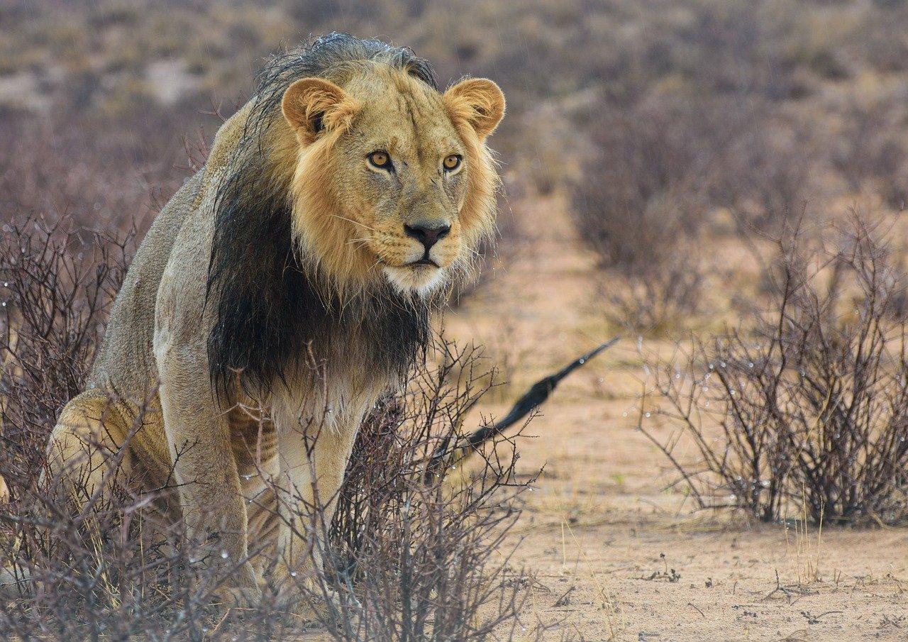 See the amazing wildlife