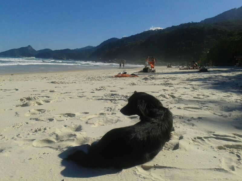 Make friends by the beach