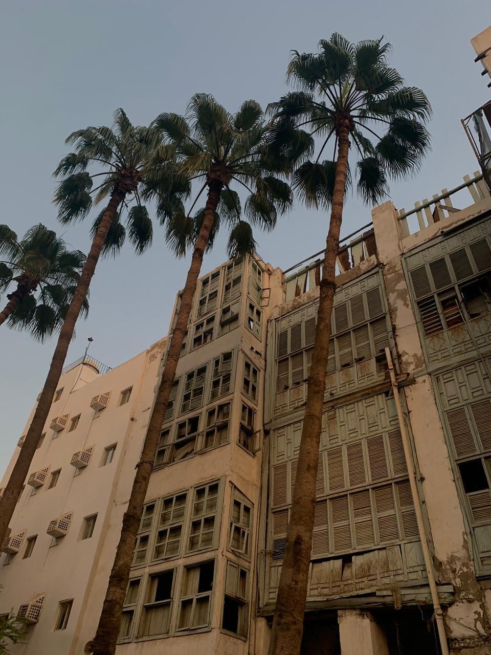 Palm Avenues