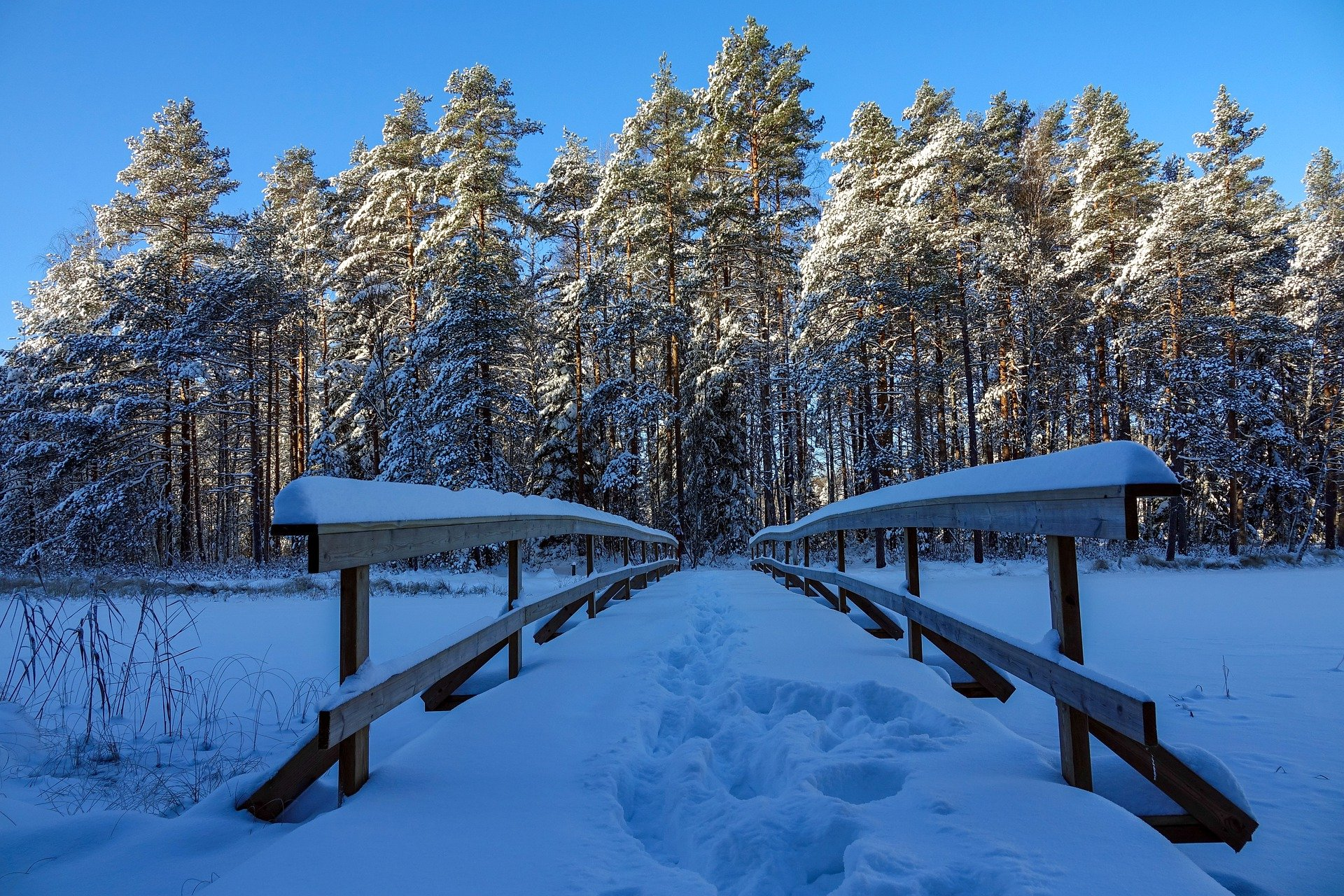 Nuuksio National Park Snowy Trail